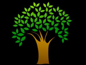 resizedimage300225-Tree-3