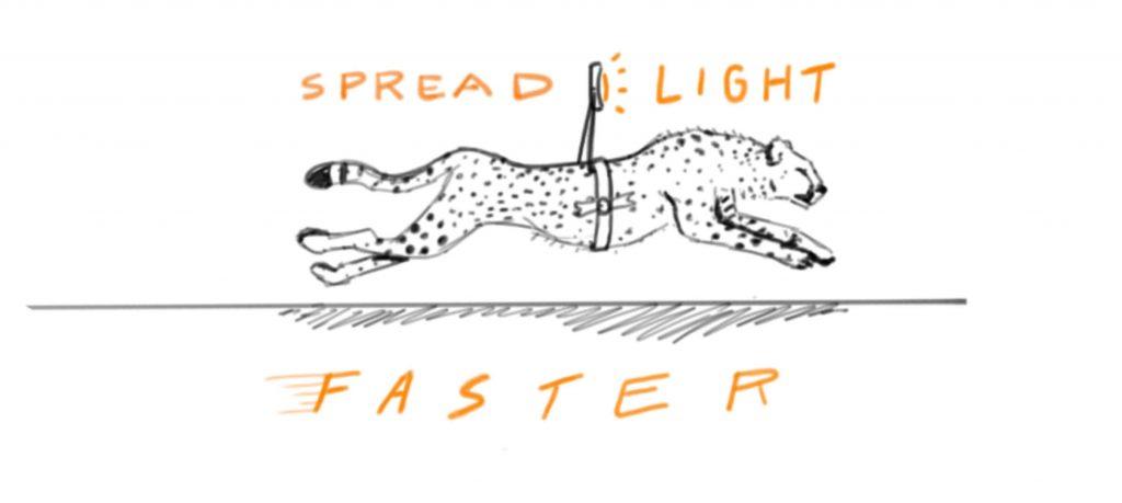 spread-light-faster-cheetah