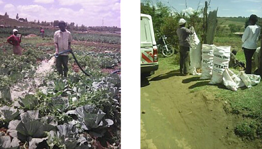 Left: 14-acre piece of land leased in Eldoret was sub-divided to support 40 members... Right: Members ready to sell their potato produce in Narok County.